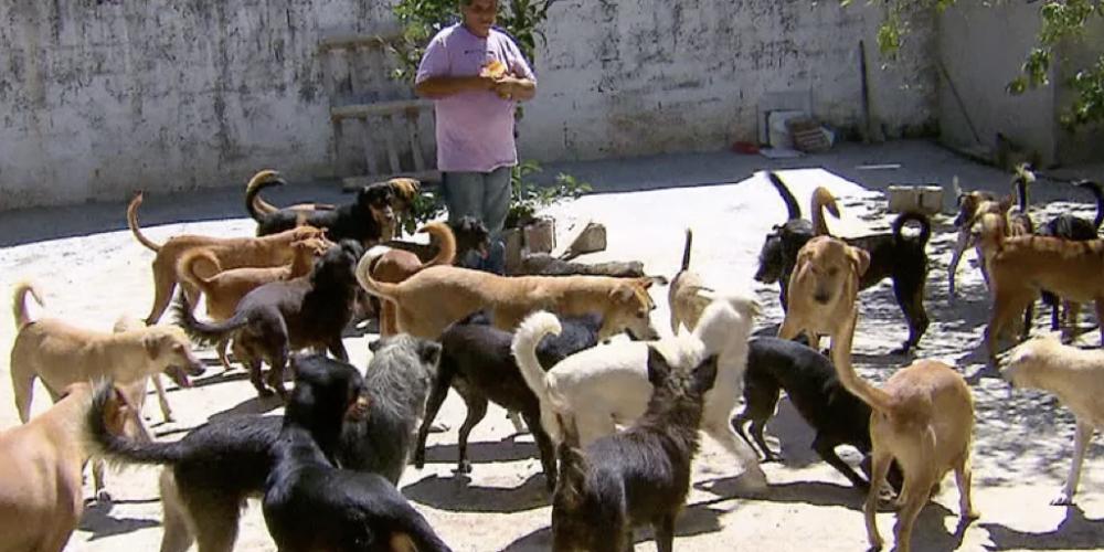 CPI da Alep propõe criação de programa estadual de recuperação de acumuladores de animais