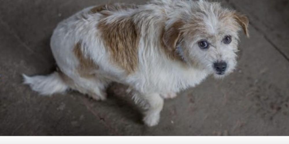 """Conheça a história da cachorrinha que viraria """"churrasco"""" e foi adotada na fronteira. Por Marcelo Toledo, Foz"""