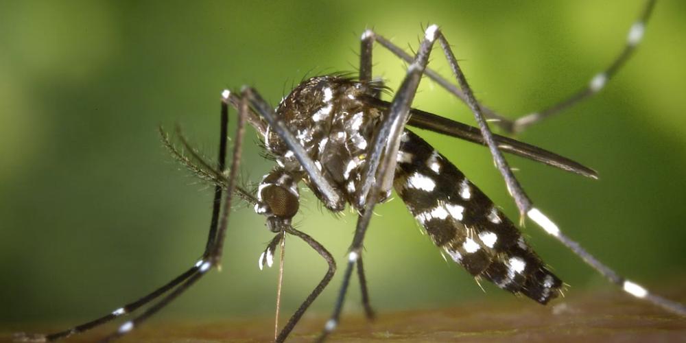 """R$ 300 milhões. Esse é o valor que o Paraná gastou com as doenças transmitidas pelo mosquito da dengue. O cálculo faz parte da pesquisa """"Aedes aegypti e sociedade"""""""