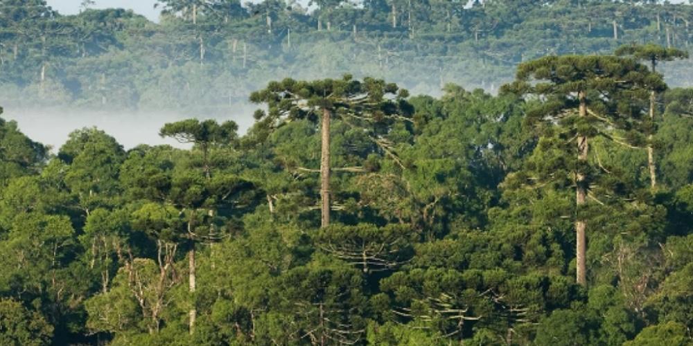 Paraná perde mais de 30% de florestas e 'ganha' 29% de área agrícola. Nos últimos 14 anos o Paraná viu 8,5% de seu território se transformar