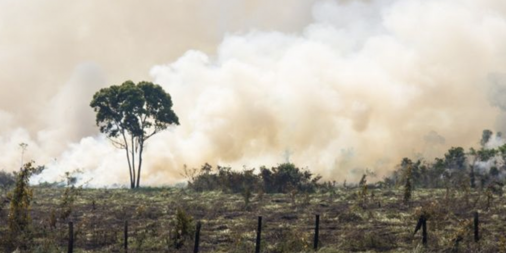 Despreocupados com o meio ambiente e com o planeta. Em vitória do agronegócio, STF mantém anistia a desmatadores